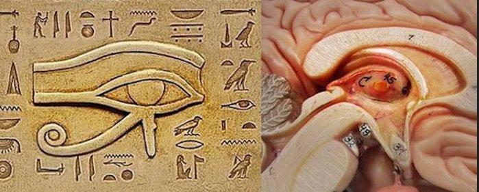 Pineal-Gland-Egyptian-Eye