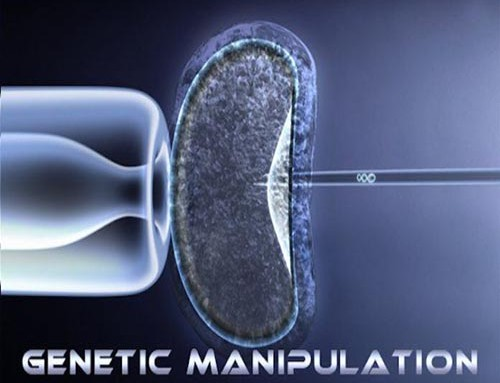 genetic manipulation Genetic engineering refers to the direct manipulation of dna to alter an organism's characteristics (phenotype) in a particular way.