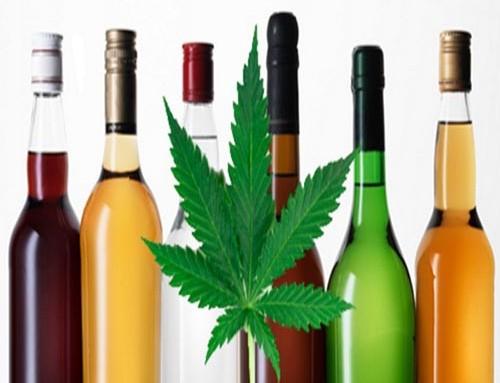 Marijuana will be like Fine Wines by Steven Maxwell