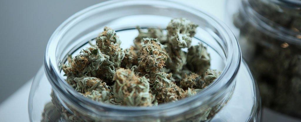 2398772792-cannabis_1024