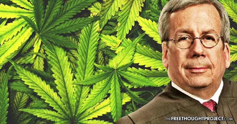 judge-free-cannabis
