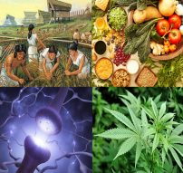 healthy-diet-endocannabinoid-system