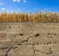 Drought-Corn-Field-Dry-Soil-Farm-Drought