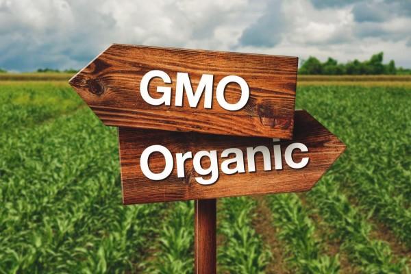 GMO-verses-Organic-Crops-e1486723778880
