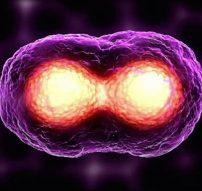 Cancer-Cells-2